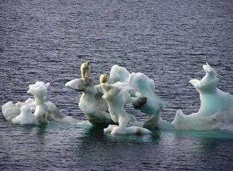 osos_trozos_hielo.jpg