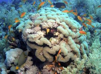 Coral_blanqueado_cambio_climatico.jpg