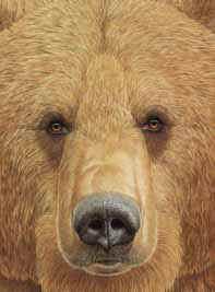 cara-oso-p.jpg